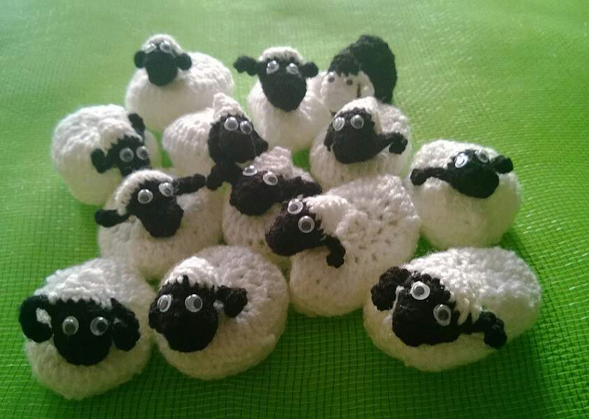 owca1